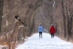Winter Wildlife Protection
